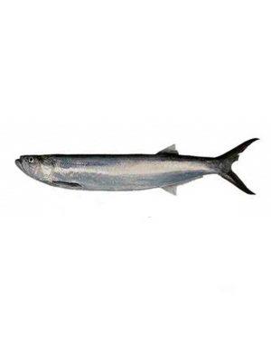ماهی خارو