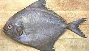 ماهي ها و آبزيان و خواص آنها