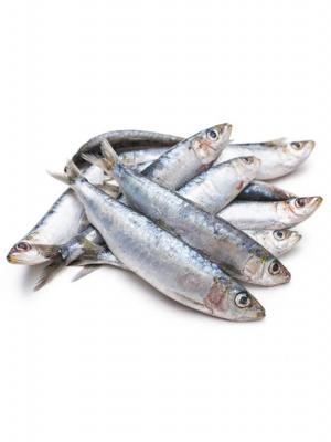 ماهی_ساردین