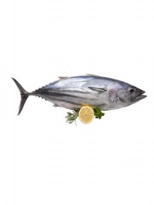 ماهی_هوور