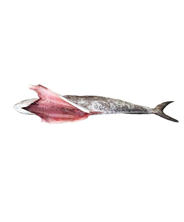ماهی شیر شکم خالی